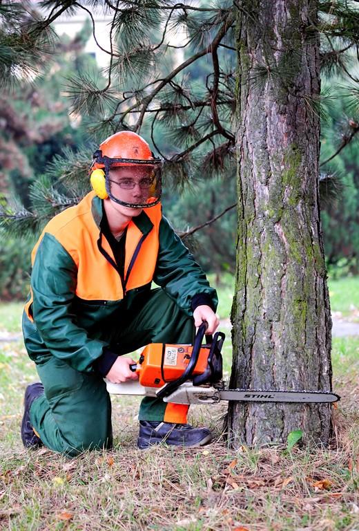 SOŠLaD Odborná prax ŠO lesníctvo v ťažbe dreva